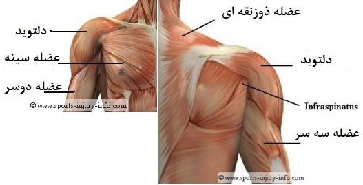 گرفتگی عضلات شانه